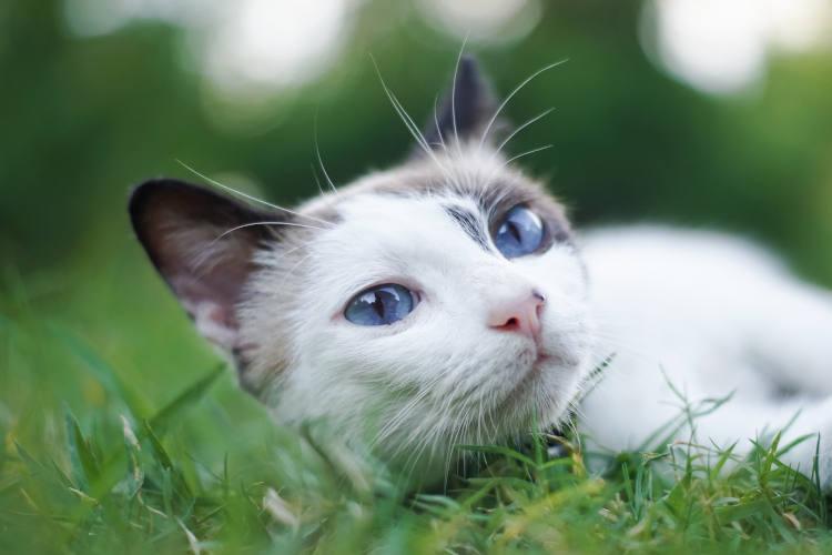 הרחקת חתולים מהדשא בחצר