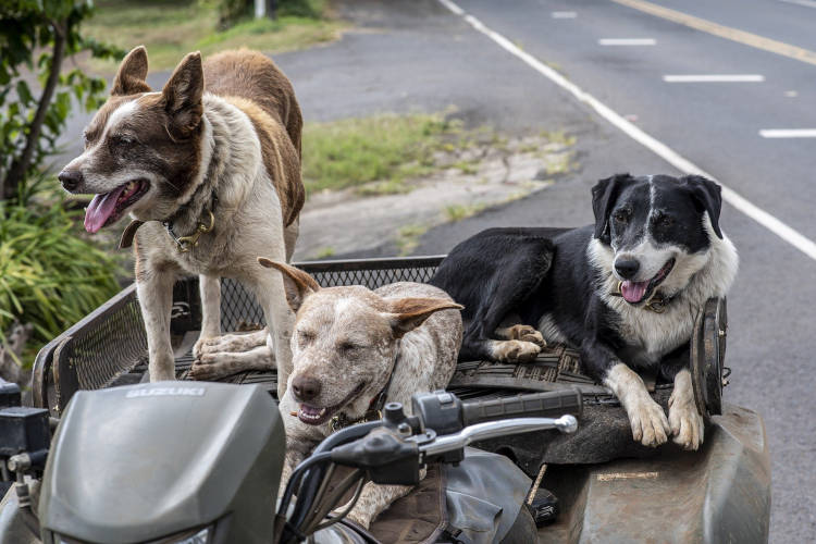 הרחקת כלבים