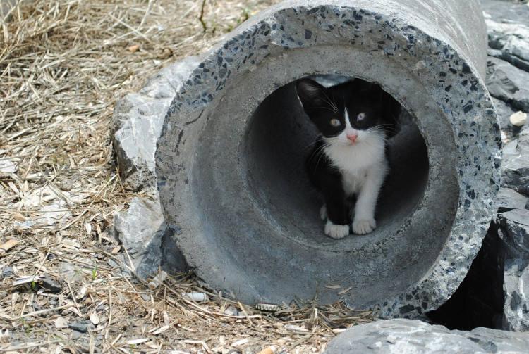 גור חתולים בתוך צינור - חילוץ בעלי חיים