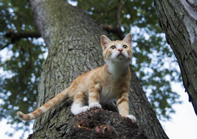 חתול על עץ גבוה - חילוץ חתולים