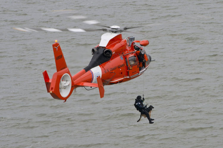 חילוץ כלבים
