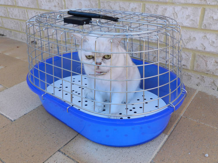 מלכודת לחתולים