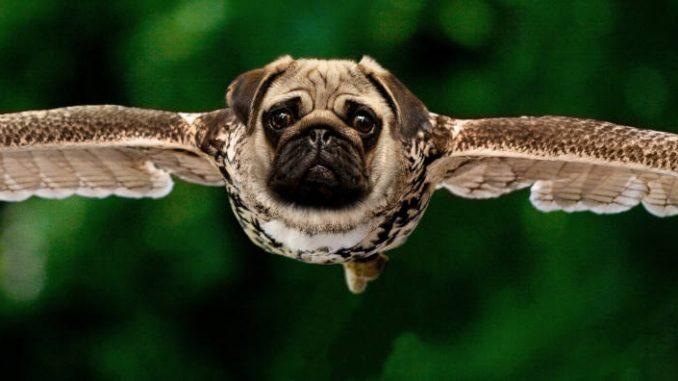 כלב עם כנפיים עף באוויר