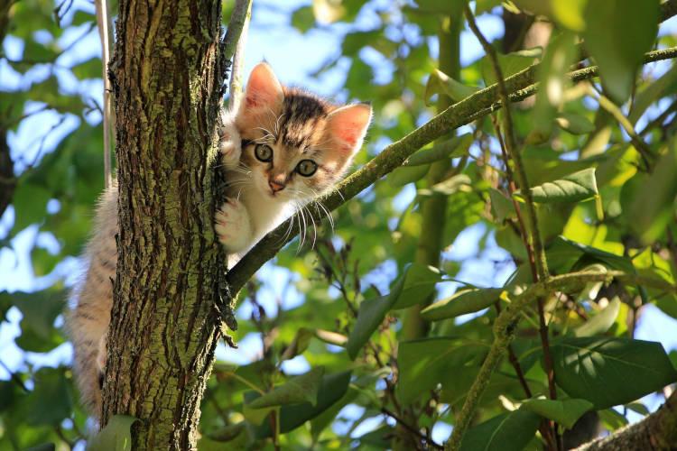 חתול תקוע על עץ גבוה מזמינים לוכד חתולים