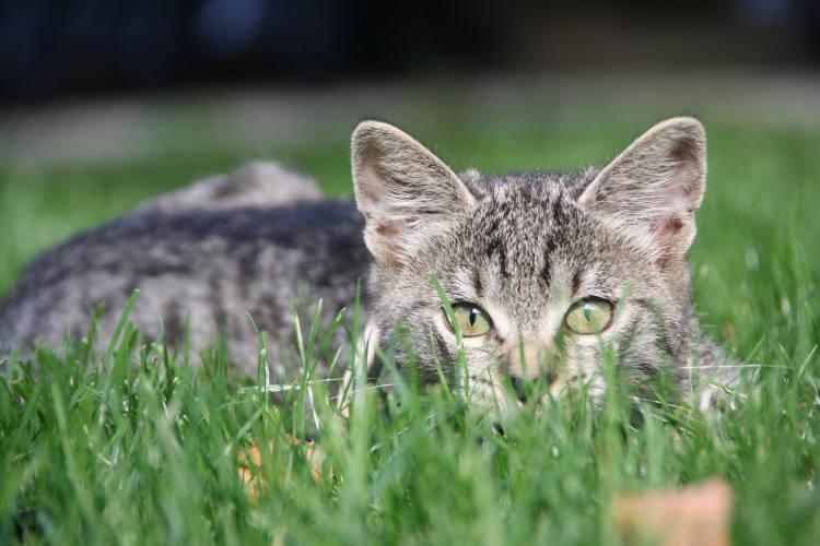 מרחיק חתולים מהדשא בחצר