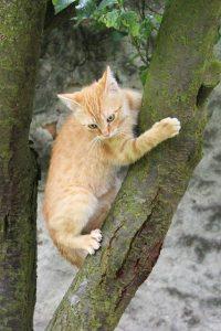חתול על עץ גבוה