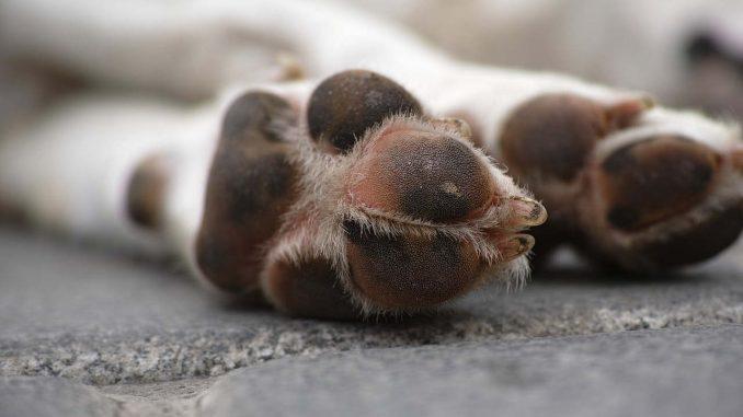 פינוי גופת כלב