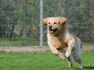 כלב רץ בפארק