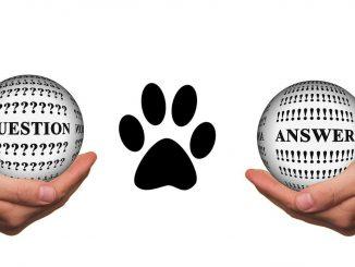 שאלות ותשובות בנושא חיות מחמד